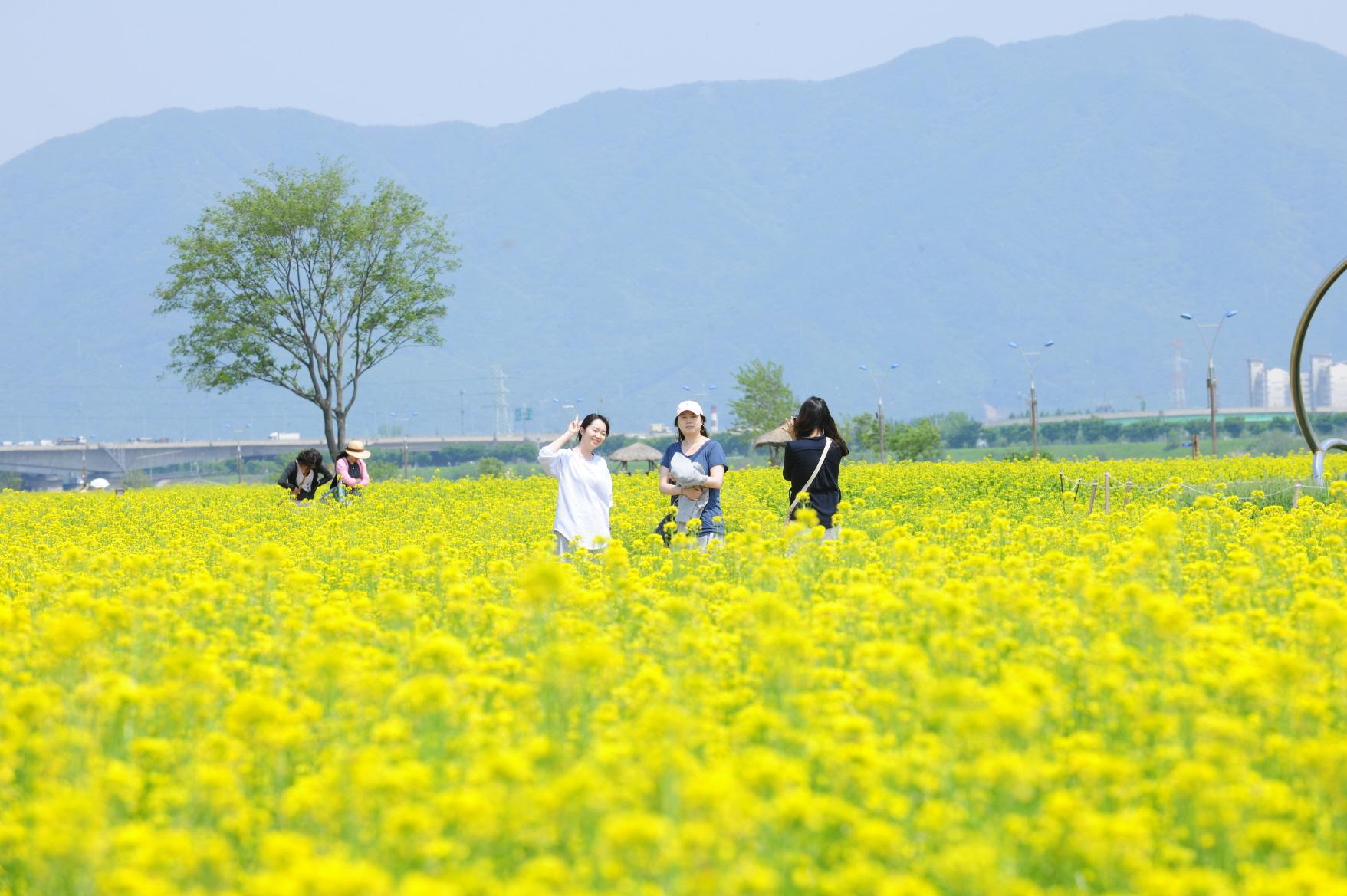 Kết quả hình ảnh cho 구리한강공원 유채꽃