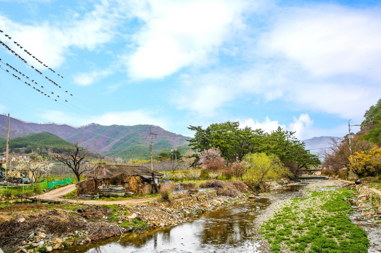 [포토] 포항시 기북 산촌의 봄