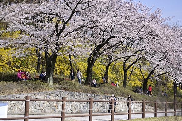 [사회적 거리두기] 봄은 예쁜데 많은 인파는 부담스러워