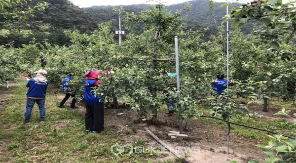 바르게살기운동 봉화군협의회 농촌일손돕기 봉사활동 실시