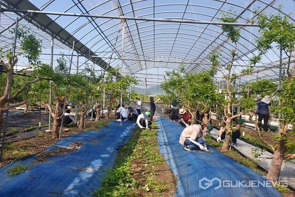 산림환경연구소 직원들 일손지원 모습.(사진제공=충북도청)