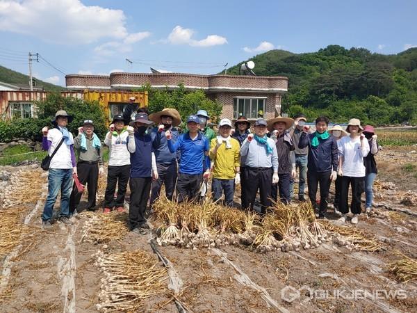 경남도청 직원들이 의령군을 찾아 농촌 일손돕기에 구슬땀을 흘렸다.