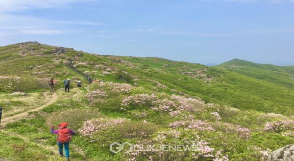 소백산 국망봉 철쭉 현황(2020.5.31)