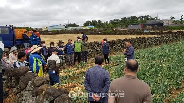 제주도농업기술원 동부농업기술센터는 지난 달 22일 신품종 양파 중생양파 'Mo900' 현장 평가회를 개최했다.