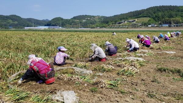 합천군 농촌인력은행 운영 자료사진