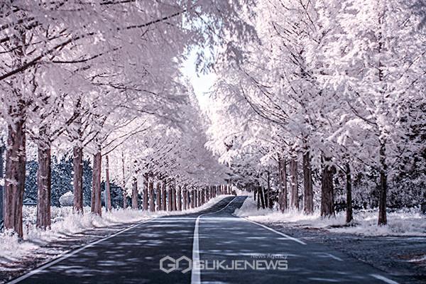 적외선 카메라로 촬영된 진안 모래재 가로수길. 사진=국제뉴스/김석태 기자
