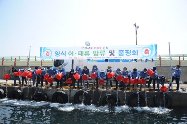 (제공=월성원자력본부) 원전 온배수를 이용해 양식한 강도다리 치어10만 마리,전복치패9만미 방류 및 품평회