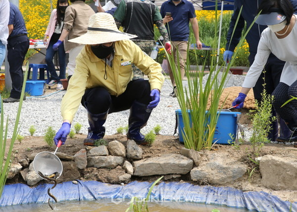 5일(금) 유성훈 금천구청장(왼쪽)이 생태연못에 미꾸라지를 방사하고 있