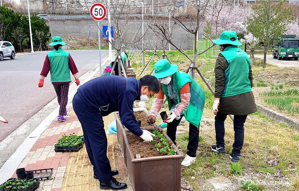 봄꽃을 식재하는 문무대왕면 새마을부녀회원들과김종대 면장