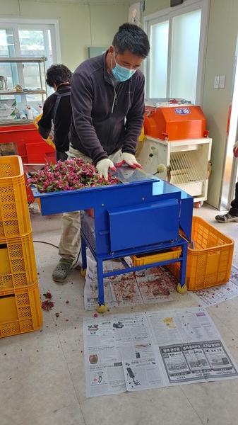 최근포항시사과재배한농민이포항꽃가루은행을방문해수분수의숫꽃에서화분을채취하고있다.(사진=포항시농업기술센터)