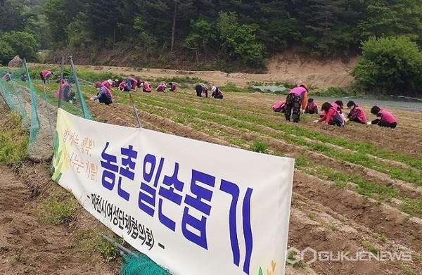 제천시여성단체협의회 농촌봉사활동 모습(사진=제천시)