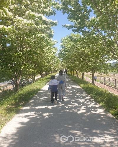 진천읍 성석리 이팝나무길.(제공=진천군청)