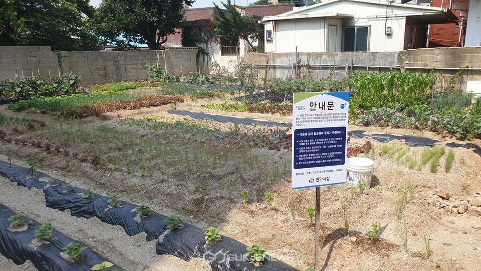 천안시가 추진한 빈집 함께 써유 사업 완료 모습