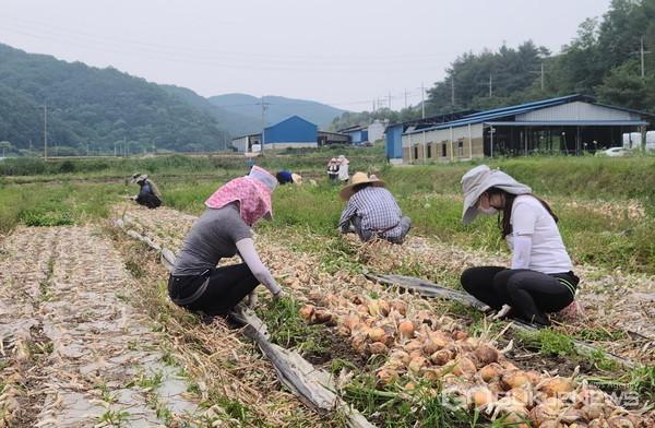 의령은 6월 18일까지를 농촌 일손돕기 중점 추진기간으로 정하고 일손돕기에 나섰다.
