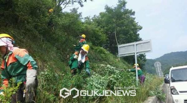 도로변 산림환경 정비를 하고 있는 산림바이오매스 수집단