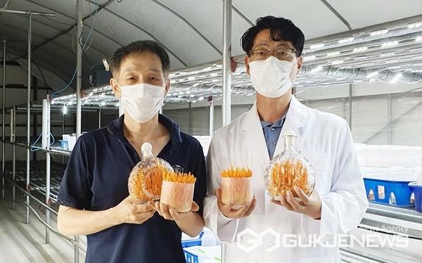 동충하초 시험연구 모습(사진=충주시)