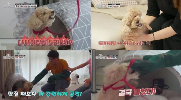 '개는 훌륭하다' 강형욱, 분노조절犬 푸들 메리 솔루션 결과는?(사진=KBS2)