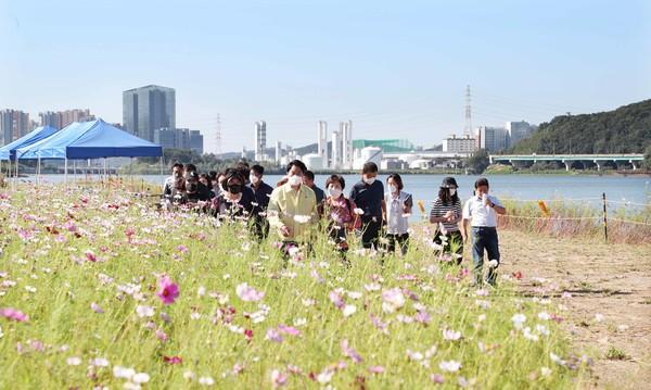 백군기 시장이 기흥호수공원 물빛정원 내 코스모스 꽃단지를 둘러보고 있는 모습(사진=용인시)