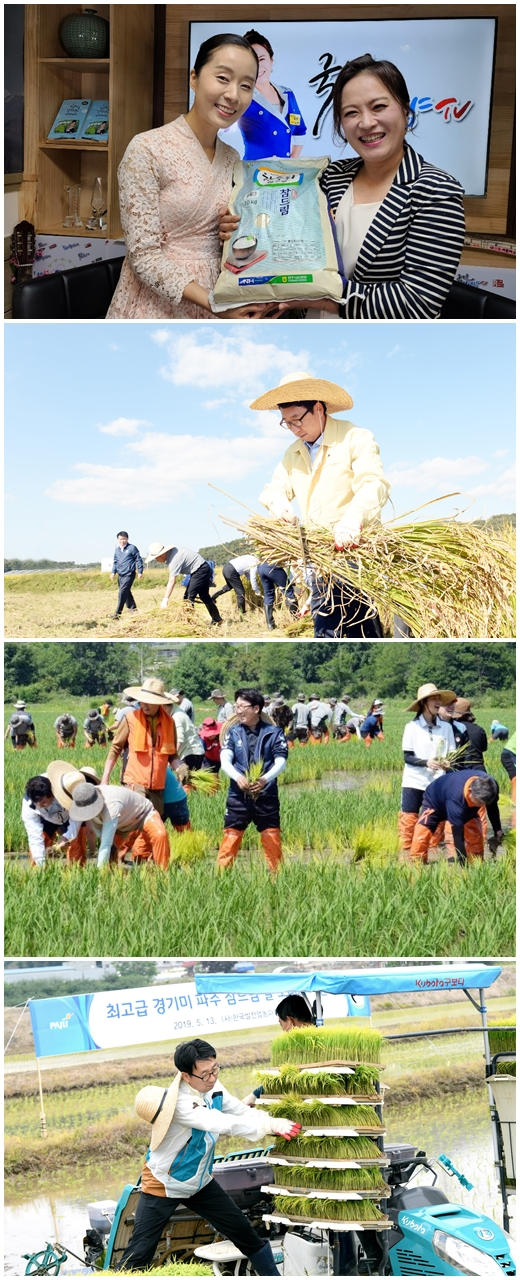 파주 임진강 한 수위 쌀