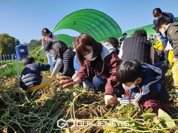 지난해 아이들이 금천구 주말농장에서 고구마를 캐는 모습. 사진=금천구청